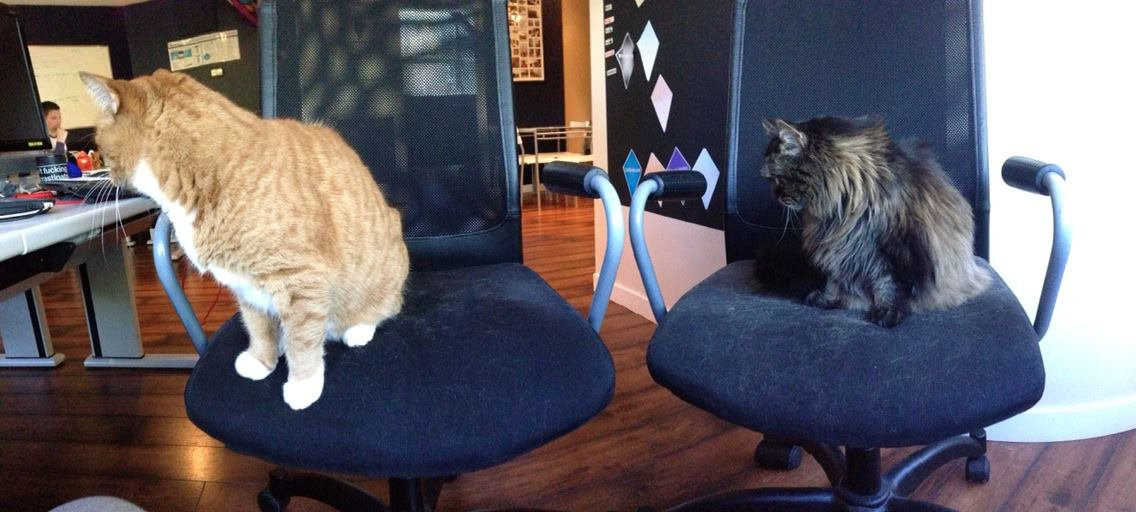 Fostered Office Cats